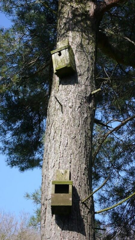 nesting boxes at Hawthorns Park