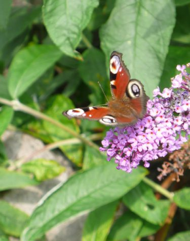 Butterflies in November – What's On in December?
