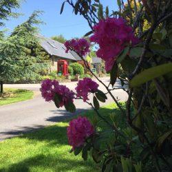 June In Pictures