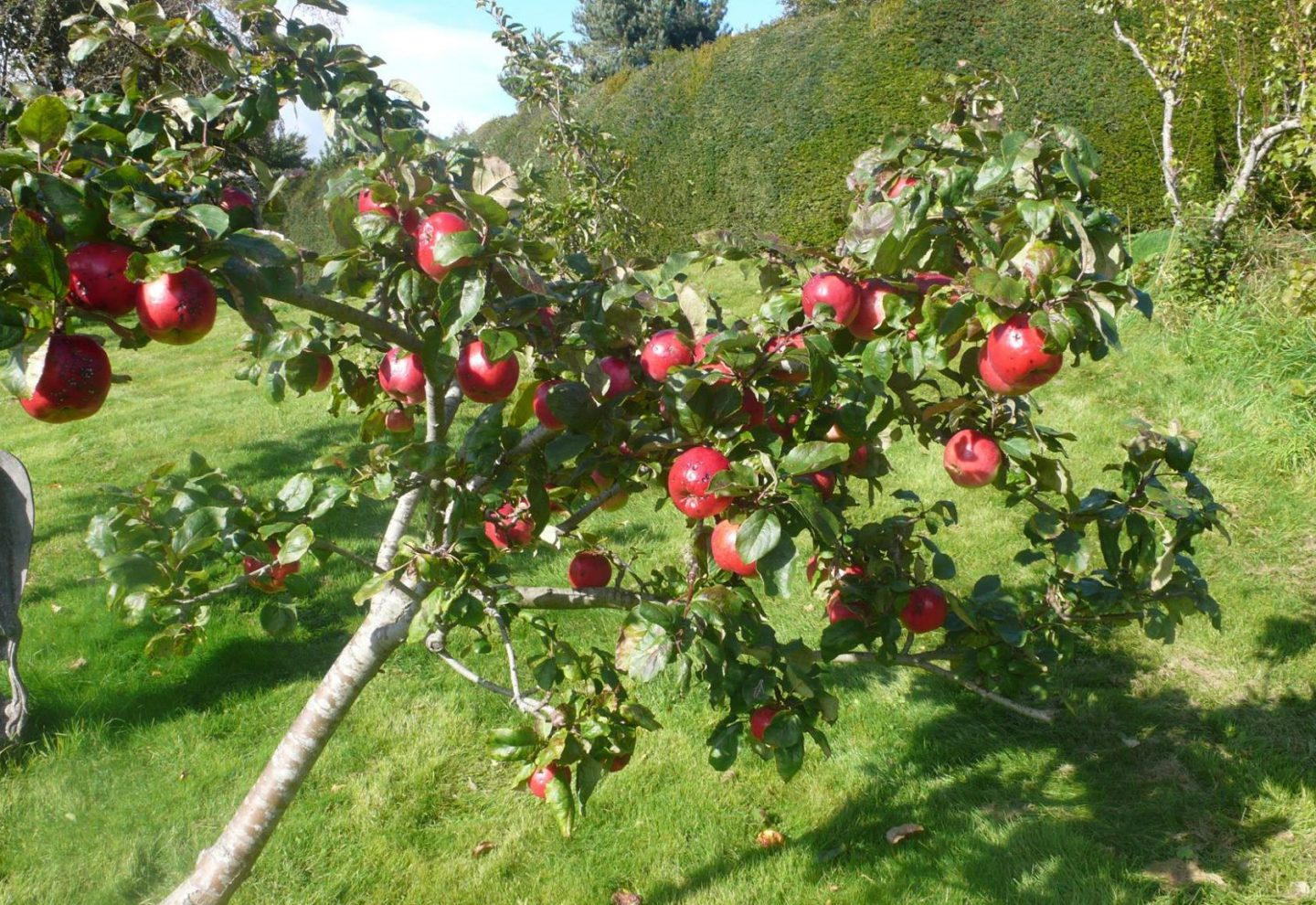 See the Park in Autumn & What's On Nearby
