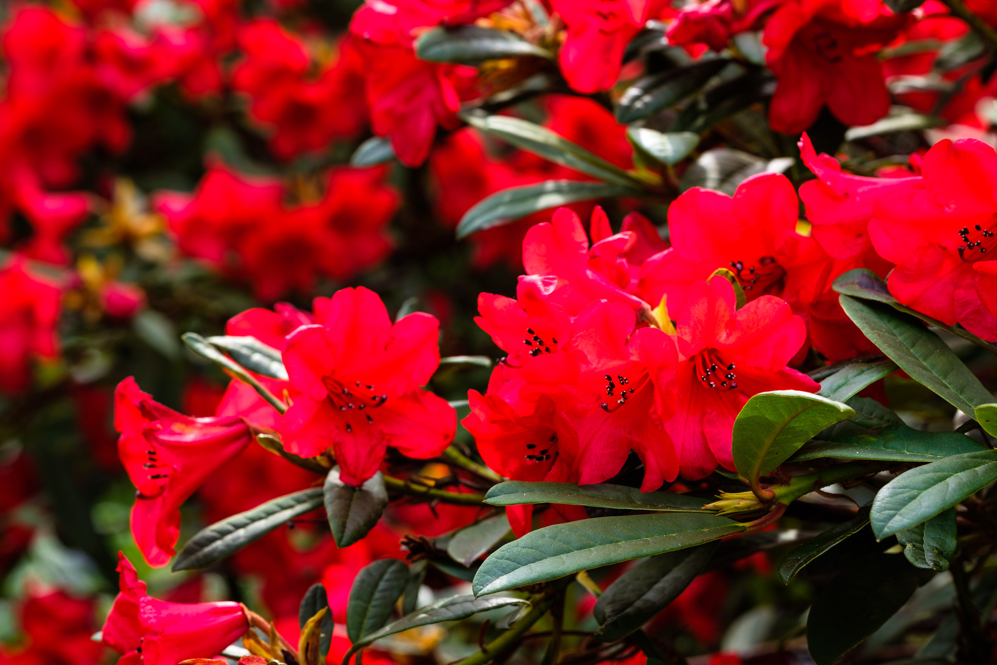 plants at Holehird Gardens Lake District