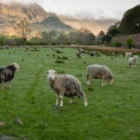 Agricultural Shows in The Lake District