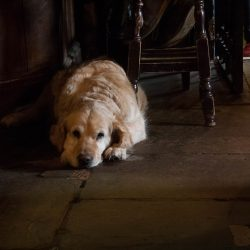 10 Dog Friendly Pubs in the Lake District